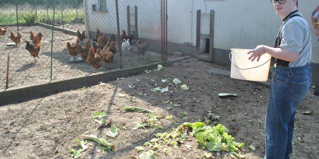 Hühner füttern war eine der Aufgaben, die sehr zu deren Freude auf die vier Besucher aus der Tagesförderstätte der Lebenshilfe Worms beim Kleintierzuchtverein Hofheim warteten. Foto: Benjamin Kloos