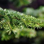 Weihnachtsbäume gesucht!