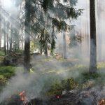 Aufgrund der anhaltenden Schönwetterphase und der andauernden Trockenheit kann es leicht zu Waldbränden kommen – bitte beachten Sie die Vorsichtsmaßnahmen. Foto: pixabay.com