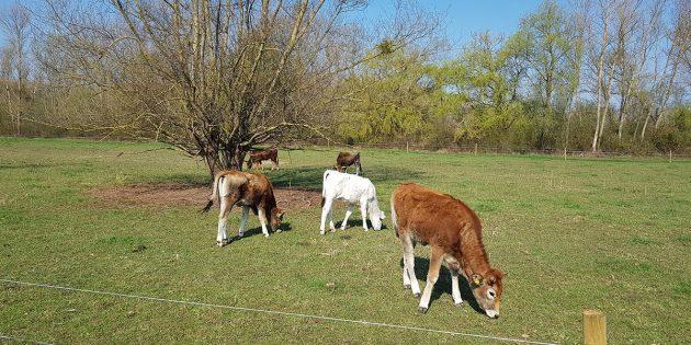 Bella, Johanna und Bonita beziehen die Sommerweide