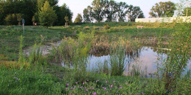 Aktueller Blick auf den Teich in der Chausseeallee. Foto: Hannelore Nowacki