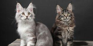Die Riedhalle in Biblis verwandelt sich am 28. und 29. September in die ARENA OF CATS. Foto: oh