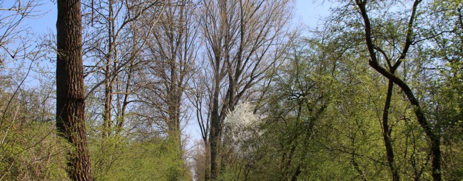 Spazieren mit Abstand und die Natur genießen