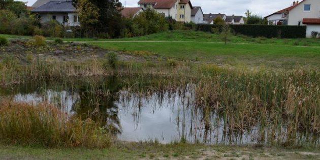 Wo einst die Bundesstraße 44 verlief, ist jetzt ein Feuchtbiotop, das für zahlreiche Tierarrten einen wertvollen Lebensraum darstellt. Ursprünglich sollte der Teich dreimal so groß werden, was aufgrund der hohen Kosten jeodoch verworfen wurde.