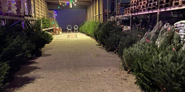 Beim Weihnachtsbaum Drive-In können die Kunden einfach auf das stimmungsvoll beleuchtete Silo-Gelände des Agrarmarkt Engert fahren und ihre Nordmanntanne aussuchen und bestellen. Wer will, bleibt dabei im Auto sitzen. Foto: oh