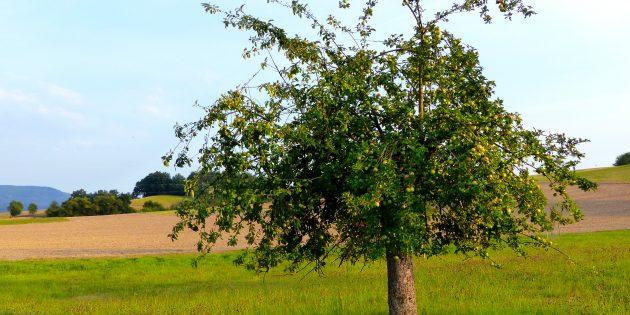 Frisches Obst aus eigenem Anbau ist immer sehr beliebt: Die Kreisverwaltung Bergstraße und der Gewässerverband Bergstraße bieten auch in diesem Jahr an, günstig Obstbäume zu erwerben. Foto: oh