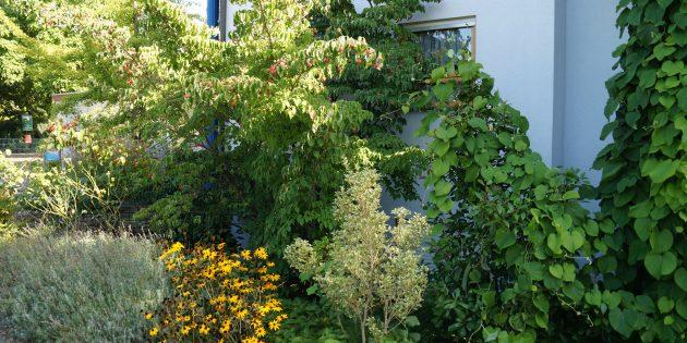 Liegen die Temperaturen in einem Vorgarten, der mit Stauden und Sträuchern bepflanzt ist, im Sommer bei nur 27 Grad, so heizen sich Schotterflächen vor dem Haus auf ca. 50 Grad auf. Foto: oh