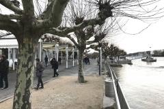 Rheinhochwasser am 7. Januar 2018 007