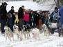 Schlittenhunderennen in Eich am 16. Dezember