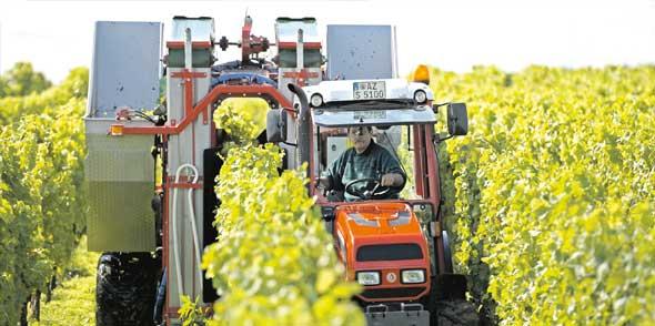 In den kommenden Wochen werden die Trauben-Vollernter wieder in den Weinbergen unterwegs sein, um die Trauben für den Jahrgang 2014 zu ernten. Foto: DAPD/Ronald Wittek/dapd