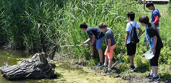 Schüler und Schülerinnen der Realschule plus Bobenheim-Roxheim waren am Tag der Artenvielfalt in der Natur rund um den Ort unterwegs.