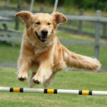 Die Mensch-Hund-Teams freuen sich darauf, den Besuchern ihr Können ztu zeigen
