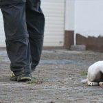 Auch das Verhalten gegenüber anderen Hunden wird im Erziehungskurs geübt.