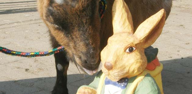Auch Rübe freut sich auf das große Fest mit dem Osterhasen.