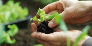 Die Floraself-Pflanzen-Anzucht findet ohne bienengefährdende oder umstrittene Neonicotinoide statt. Foto: Hornbach