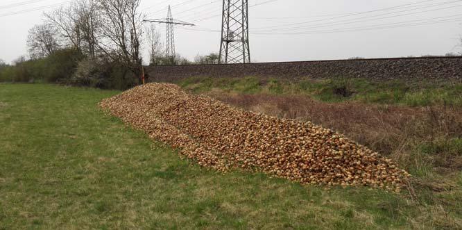 Illegale Ablagerung von mind. 25 Kubikmeter Zwiebelabfällen im Außenbereich von Herrnsheim an den Bahngleisen, südlich der Firma TST Worms am Langgewann.