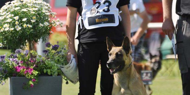 """Howard hat viel Spaß an seiner Beschäftigung und ist ein ganz """"normaler"""" Familienhund von Andrea und Stefan Brückmann."""