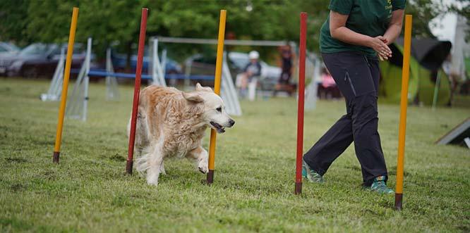 Fit for Dogs lädt zum Wettbewerb ein.