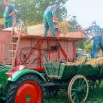 Die Dreschgemeinschaft lädt vom 17. bis 19. August nach Hohen-Sülzen und präsentiert historische Landmaschinen.