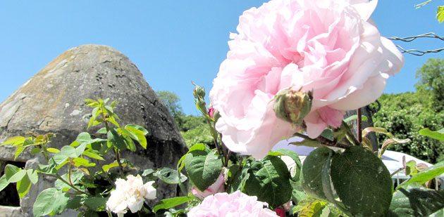 Bei warmem Sommerwetter zeigen sich die Trullos von ihrer schönsten Seite.