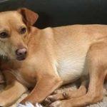Lunedi ist mit anderen Hunden verträglich und liebt Menschen.