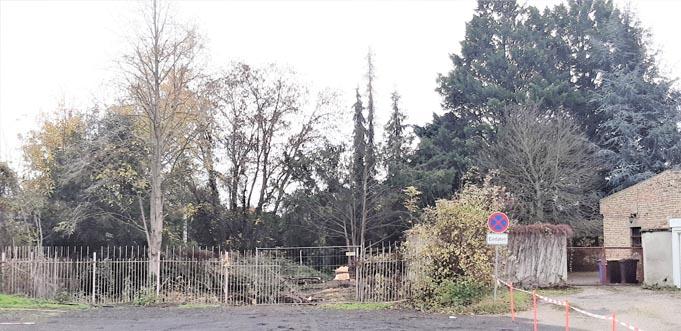 …manche Bäume stehen derzeit noch. Doch sie werden auch noch alle gefällt. Fotos: NABU