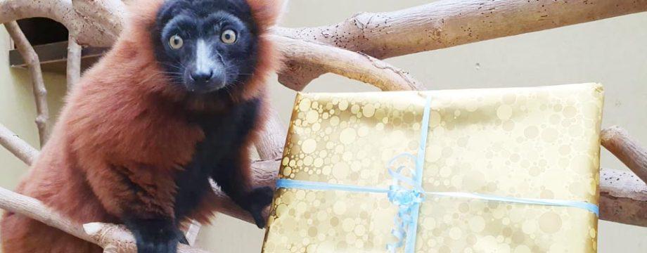 Was würde wohl auf den Wunschzetteln der Tiere stehen? Futter? Spielzeug? Die Tierpfleger haben sich Gedanken gemacht, womit der Weihnachtsmann und seine Helfer den tierischen Bewohnern des Tiergarten Worms eine Riesenfreude bereiten könnten. Foto: Nina Hochstrasser