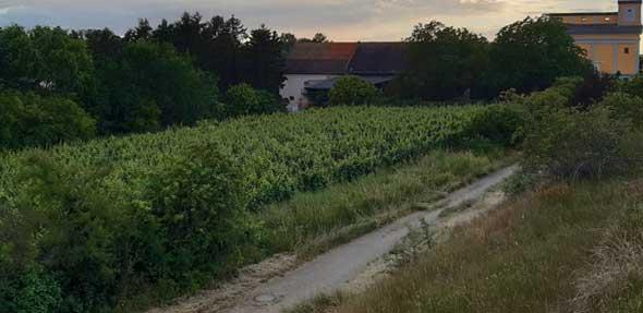 """Die Gegner des Baugebietes """"Lorchsmühle"""" wollen mit einem Einwohnerantrag den Stadtrat dazu bringen, sich mit einem Teil des Baugebietes zu befassen und fordern den Vorrang für Natur und Naherholung. Foto: Bösl/NABU"""