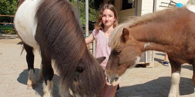 Während des Patentages ist es möglich – den Tiergartentieren einmal nahe sein. Die 11-Jährige Charlotta auf Tuchfühlung mit einem ihrer Ponys.