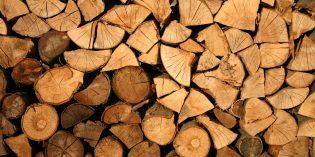 Waldfrisches Brennholz bei Hornbach
